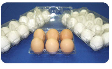 شراء Egg Trays